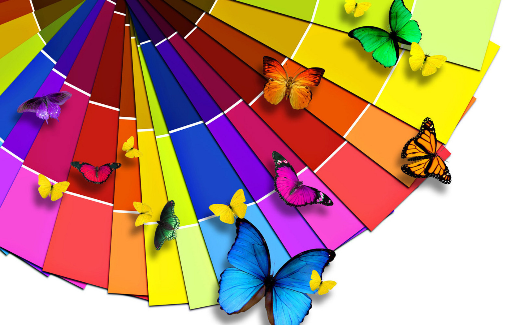Photoshop_Multi-coloured_butterflies_023732_.jpg